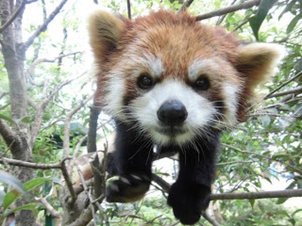 「羽村市動物公園 園長」の画像検索結果